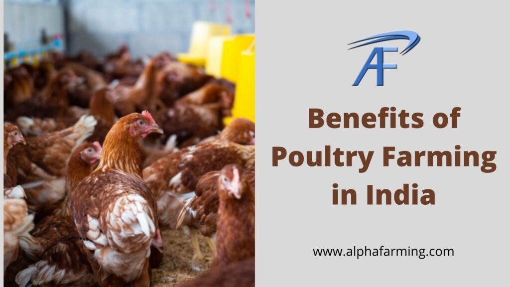 Benefits Of Poultry Farming In India